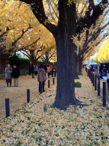 Autumn Leaves of Gingko