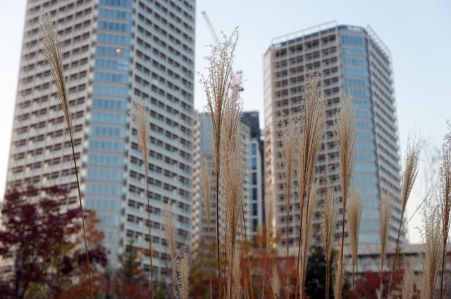 帰真園 2014.11.22
