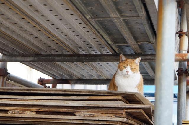 見つけた猫 2014.12.10