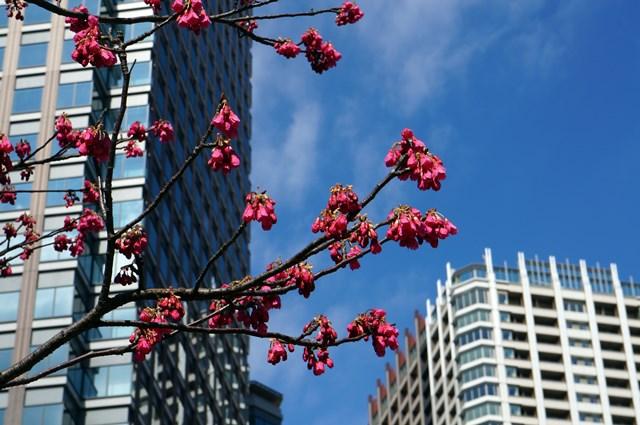 「パークシティ大崎 ザ タワー」 2015年3月上旬