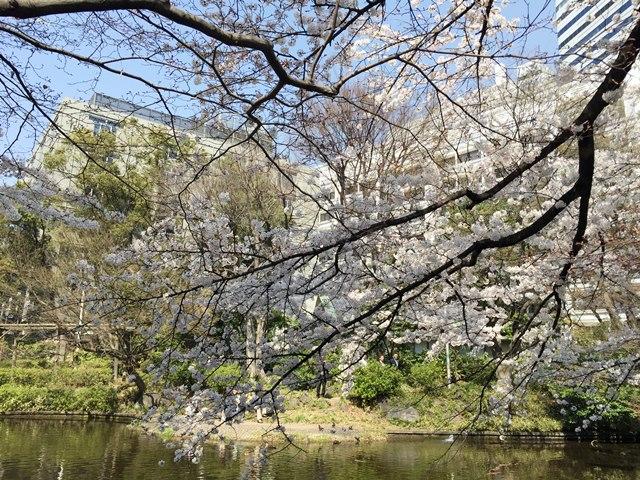清水谷公園の池 2015.3.30