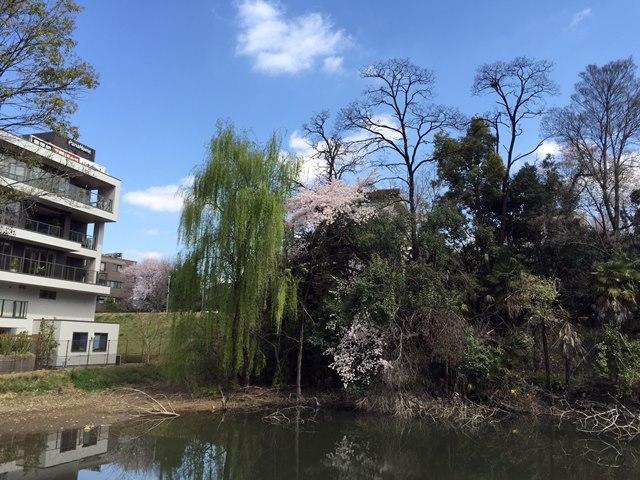 「青山病院跡地」 2015.4.2