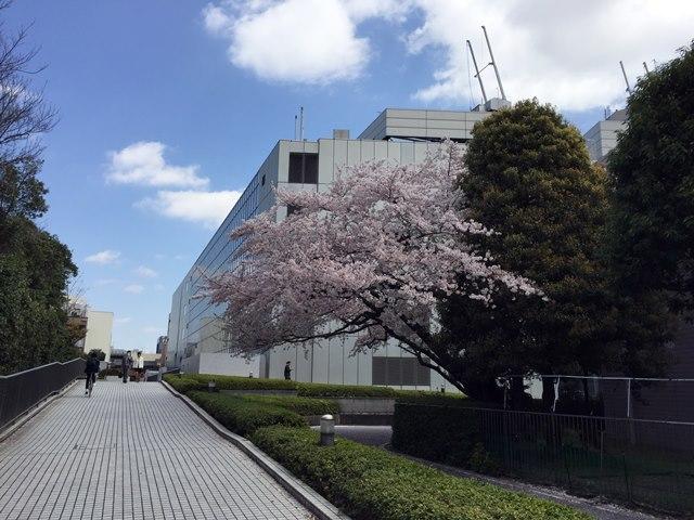 こどもの城 桜 2015.4.2