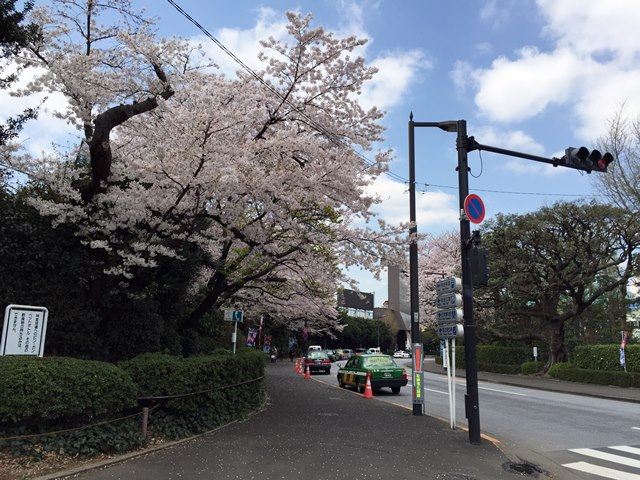 明治神宮外苑の桜 2015.4.2