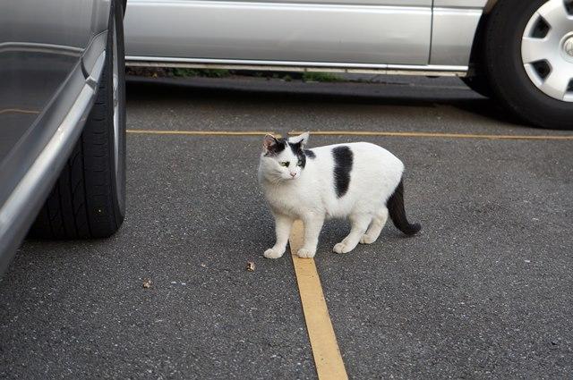 東池袋の猫 2015.4.12